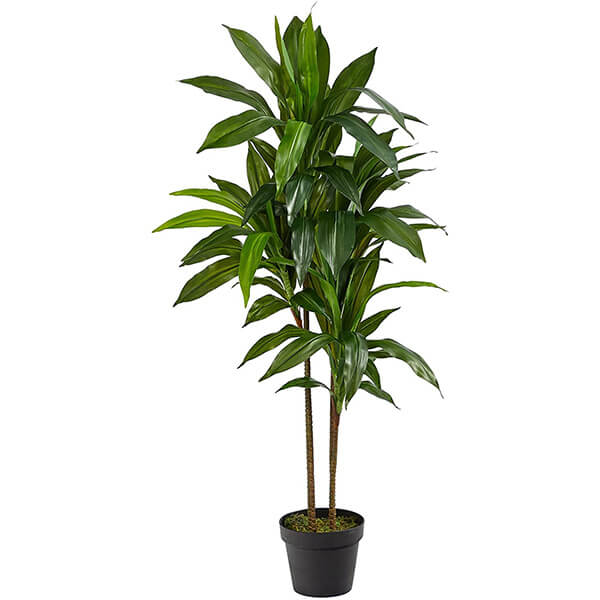 Artificial Dracaena Plant (3 ft. 7 in)