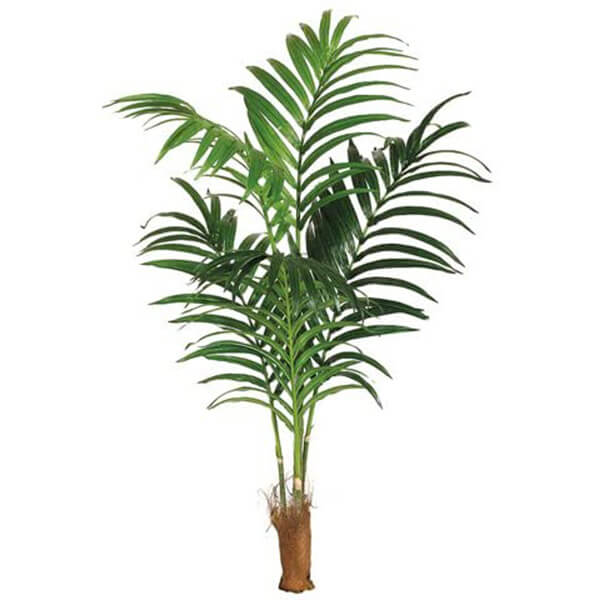 Artificial Kentia Palm Leaves without Pot (7 ft)