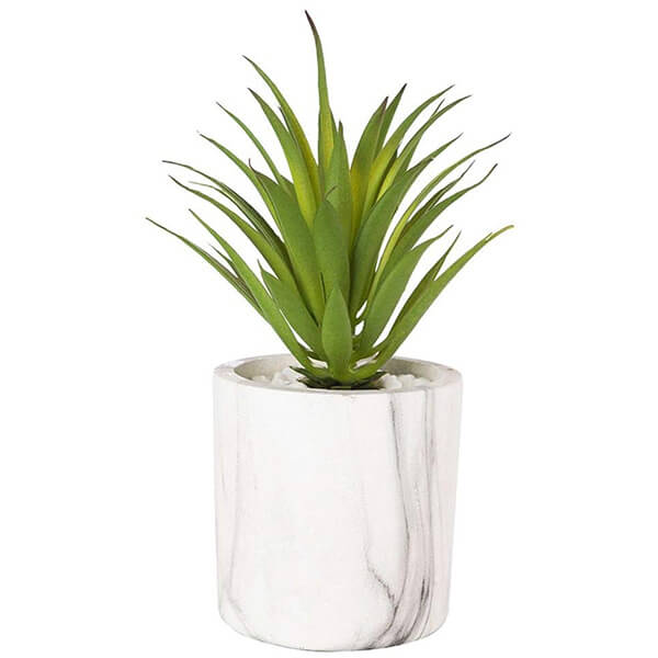 Mini Potted False Agave Plant (0 ft. 7 in)
