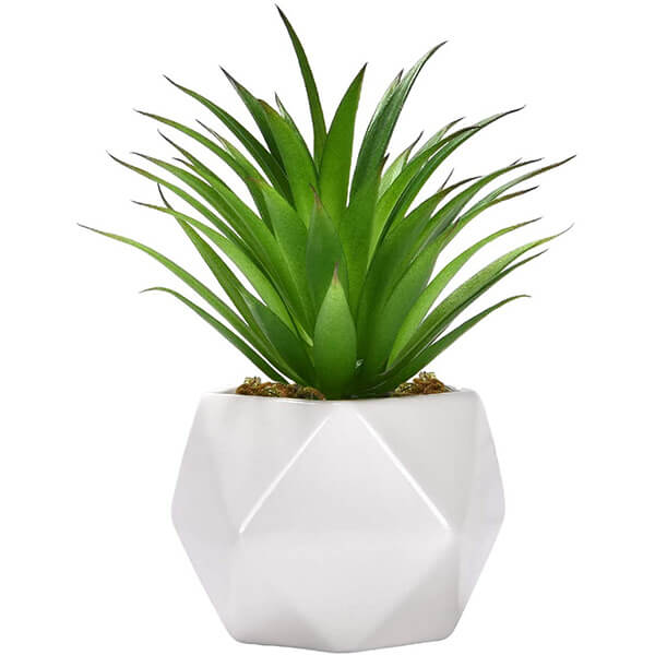 Mini Potted Agave Plant with Geometric Vase (6.7 in)
