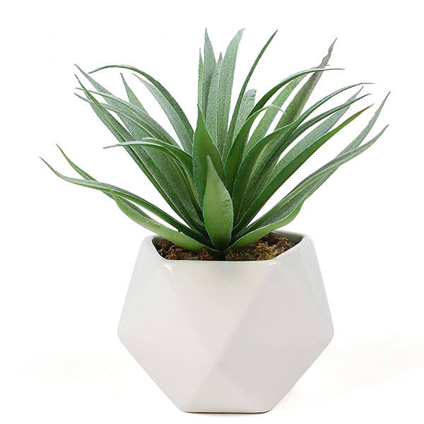 Mini Potted Plant With Geometric Planter (2.75 in)