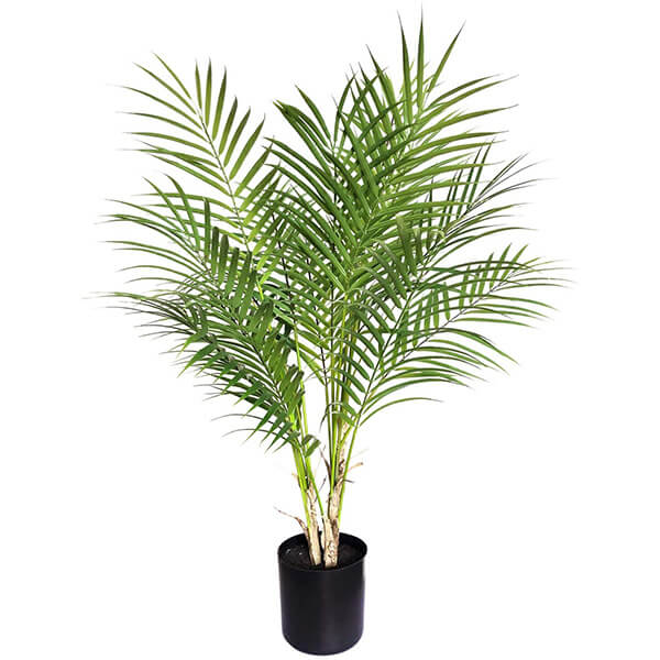 Paradise Palm Tree Plant for Indoors (2 ft. 6 in)