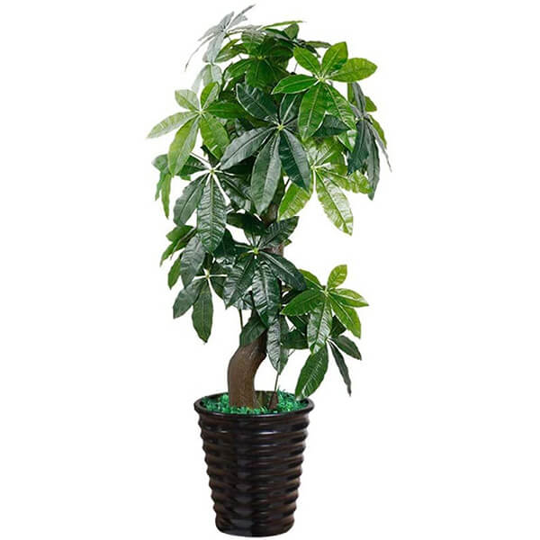 Faux Money Tree for Indoors (5 ft. 1 in)