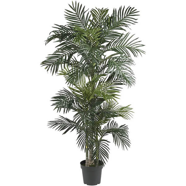 Golden Cane Palm Silk Tree (6 ft. 6 in)