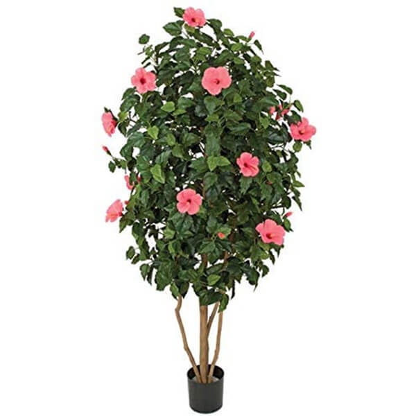 Hot Pink Hibiscus Tree (5 ft. 6 in)