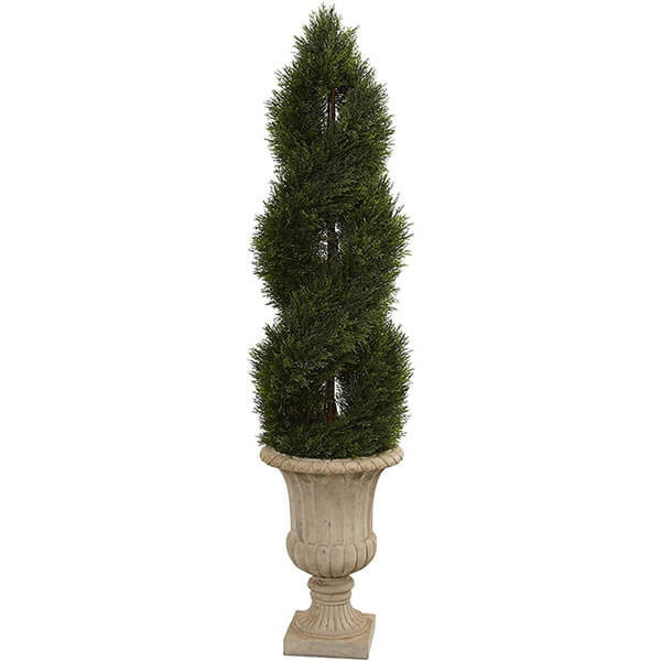 Double Spiral Topiary Cypress Tree (5 ft)
