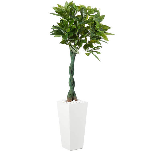 Artificial Money Tree with White Planter (5 ft)
