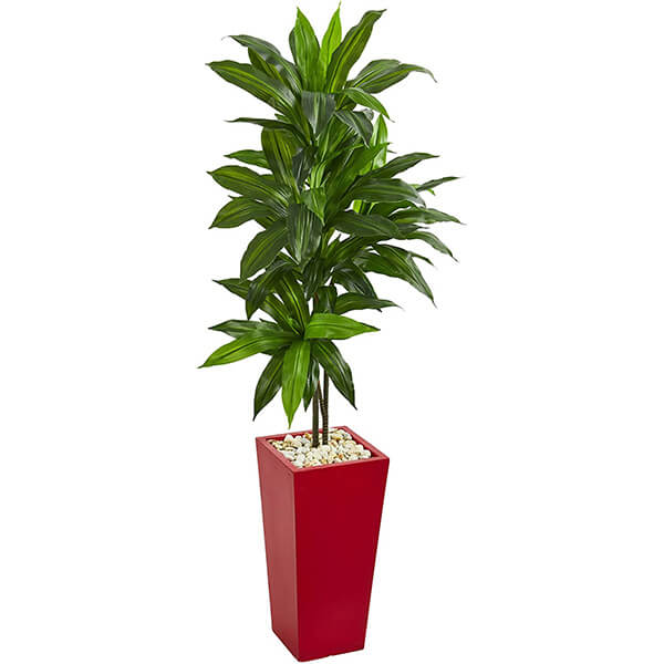 Artificial Dracaena Plant with Red planter (5 ft)